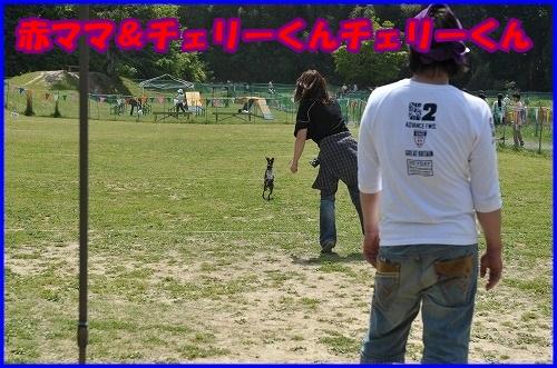 DSC_3637_2014050721213928f.jpg