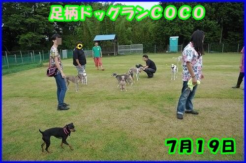 DSC_3900_201407202226391f4.jpg