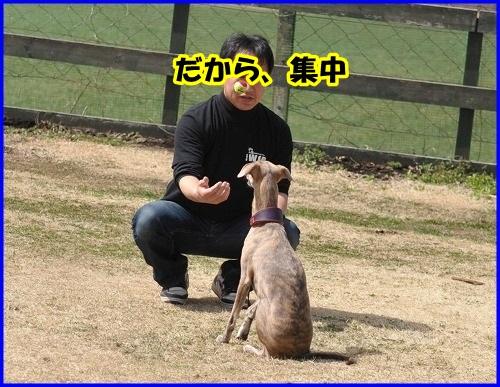 DSC_4002_20140402232754b9d.jpg