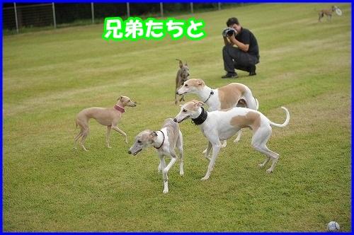 DSC_4007_20140720222642bb8.jpg