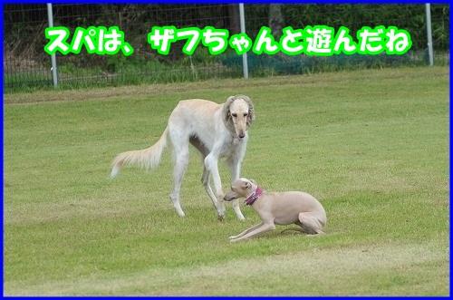 DSC_4012_201407202227149e8.jpg