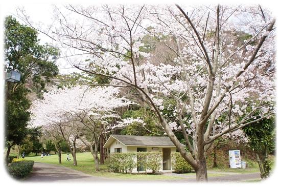 桜は咲いたかな