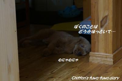 DSC03720_convert_20140804181913.jpg