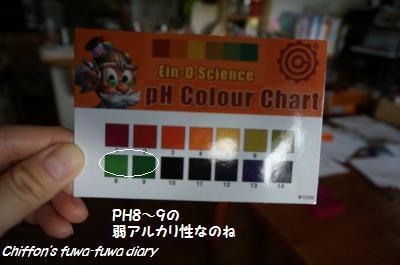DSC03854_convert_20140825223628.jpg