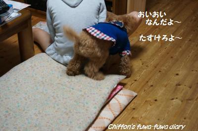 DSC04127_convert_20140912204641.jpg