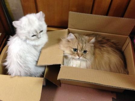 箱も仲良く