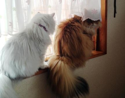 レオンとマリー (5)