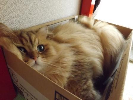 箱 (3)