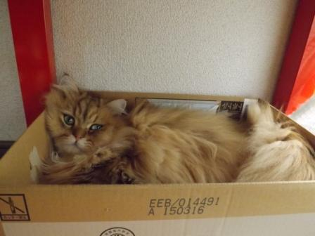 箱 (2)
