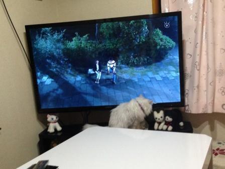 マリーとTV (2)
