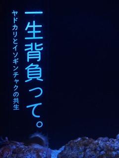 2014_06090116.jpg