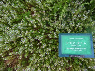 syukusyo-RIMG0054_2014070616565492d.jpg
