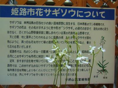 syukusyo-RIMG0153.jpg