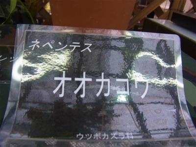 syukusyo-RIMG0162_20140814163435b36.jpg