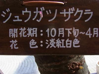 syukusyo-RIMG0646.jpg