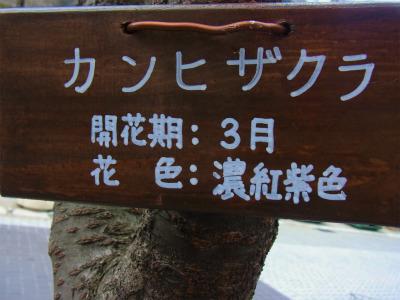 syukusyo-RIMG0654.jpg