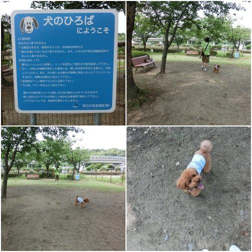 広川ドッグラン
