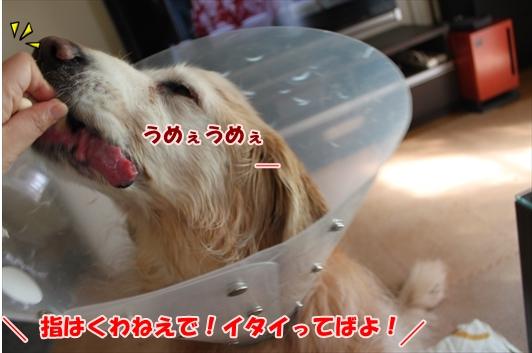 IMG_3840_R.jpg