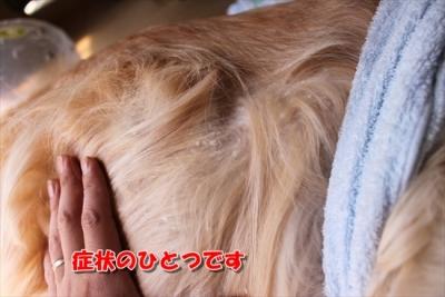 IMG_4003_R.jpg