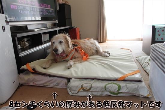 IMG_4047_R.jpg