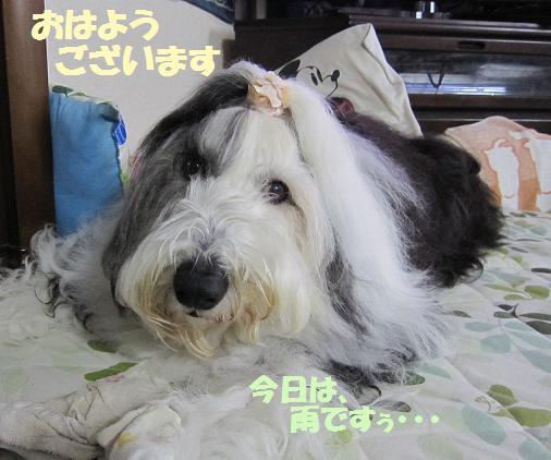 Cookie_20140330155401184.jpg