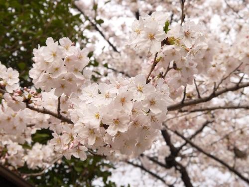 2014春うさんぽ2