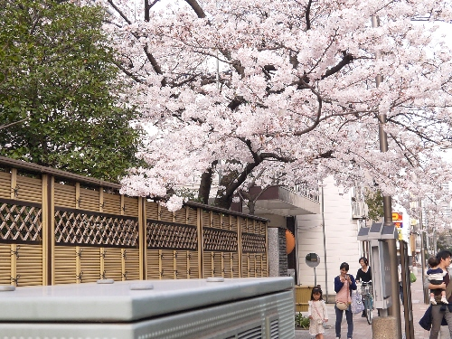 2014春うさんぽ