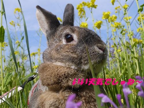 2014春うさんぽ7