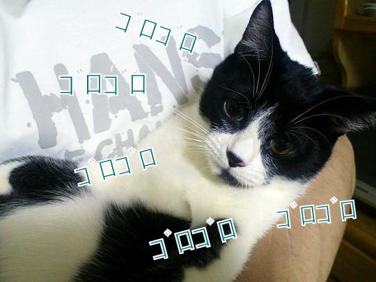 1-1-2012040800010000-002.jpg