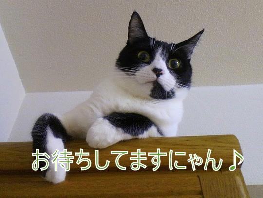 1-1-2012121020150004.jpg