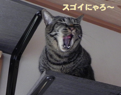 2014051101.png