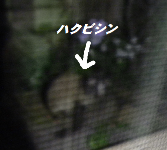 2014060301.png