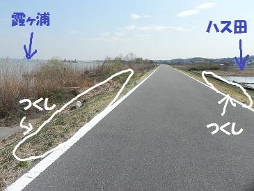 DSCN833201207.jpg