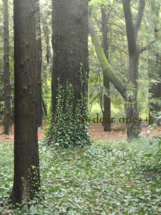 春の公園140422_1