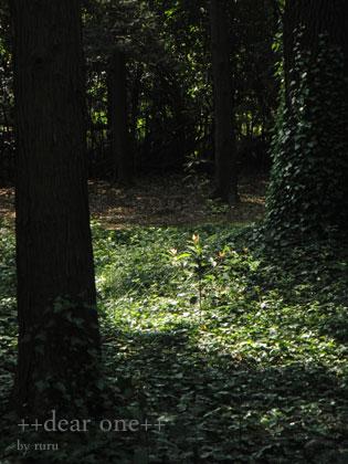 春の公園140422_2