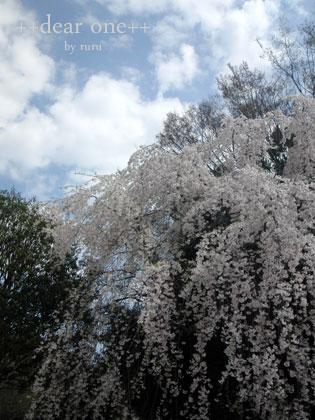 春の公園140422_3