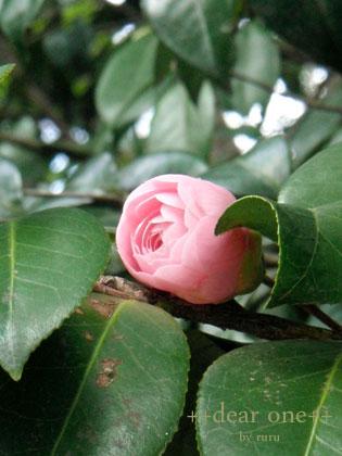 春の公園140422_4