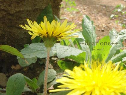 春の公園140422_5