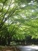 春の公園♪(2014/04/22)