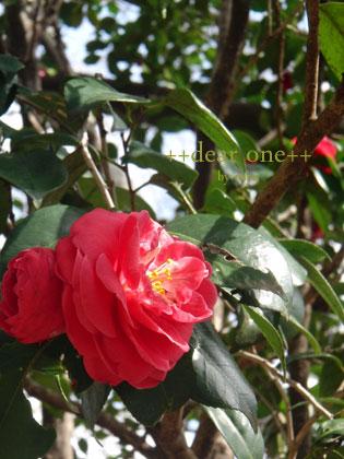 春の色集め140423_2
