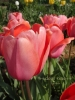 春の色集め#1/赤~オレンジ