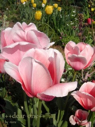 春の色集め140423_8