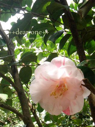 春の色集め140423_9