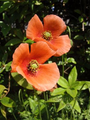 春の色集め140423_12