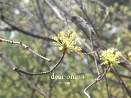春の色集め140424_2