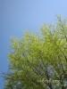 春の色集め#3/緑色