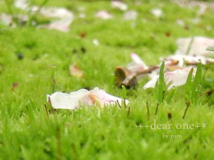 春の色集め140425_4