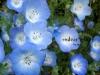 春の色集め#4/青~紫