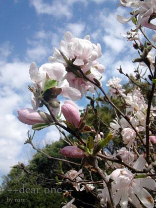 春の色集め140428_10