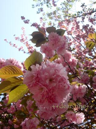 春の色集め140428_12
